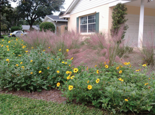 10 Great Native Foundation Shrubs and Why You Should Plant Them