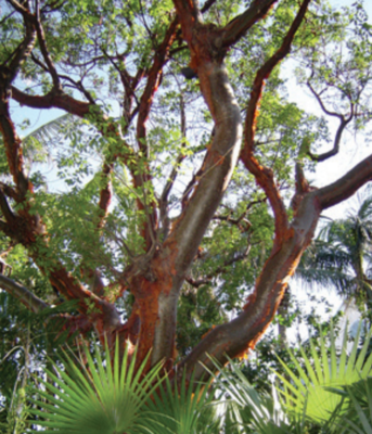 10 Native Trees For Volusia County and Why You Should Plant Them